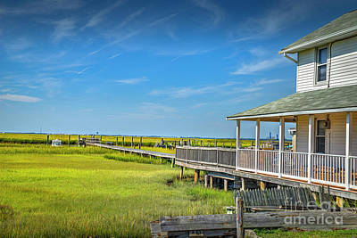 Photograph - Grassy Wetlands Peaceful Day by David Zanzinger