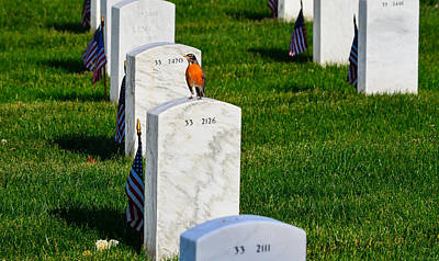 Photograph - Grave Robin by Jeff at JSJ Photography