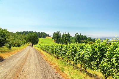 Gravel Road And Vineyard Print by Jess Kraft