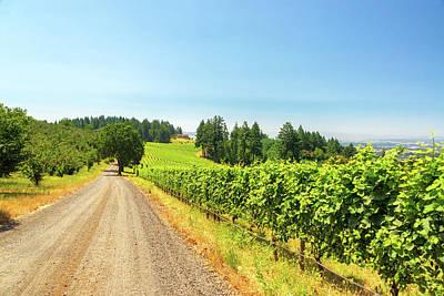 Pinot Noir Photograph - Gravel Road And Vineyard by Jess Kraft