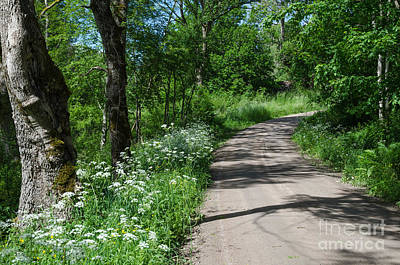 Photograph - Gravel Road With Summer Feeling by Kennerth and Birgitta Kullman
