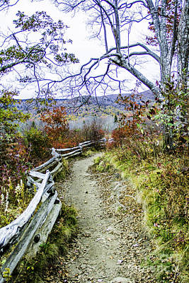 Photograph - Graveyard Fields Trail by Allen Nice-Webb