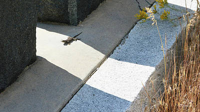 Photograph - Graveyard Lizard Sunbathing by Brent Dolliver