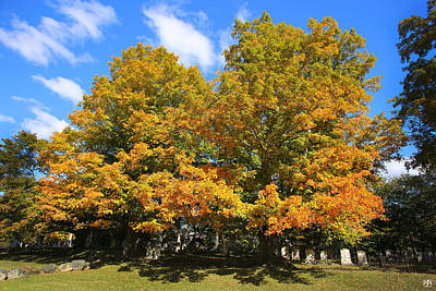 Photograph - Graveyard Maples by John Meader