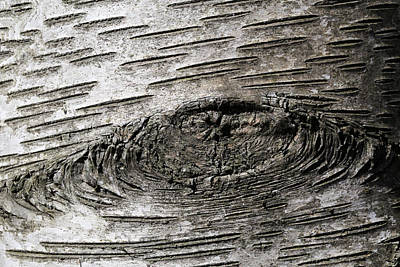 Photograph - Gray Birch Bark by Mary Bedy