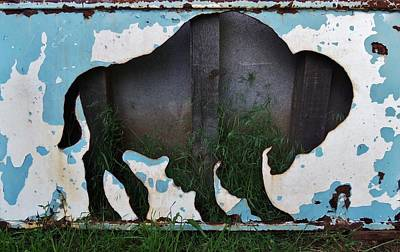 Photograph - Gray Buffalo by Larry Campbell