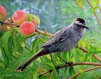 Gray Cat Bird Original