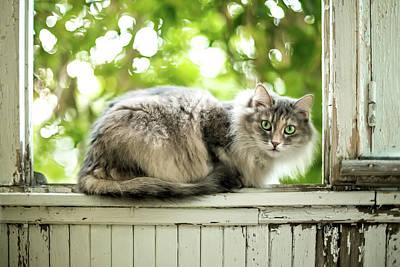 Cat Photograph - Gray Cat Sitting On A Balcony by Oksana Ariskina