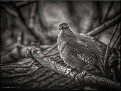 Photograph - Gray Catbird by LeeAnn McLaneGoetz McLaneGoetzStudioLLCcom