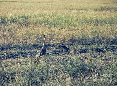 Photograph - Gray Crowned Cranes And Their Babies by Claudia M Photography