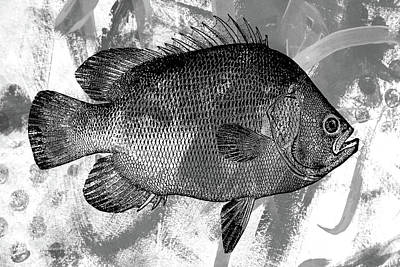 Digital Art - Gray Fish by Nancy Merkle