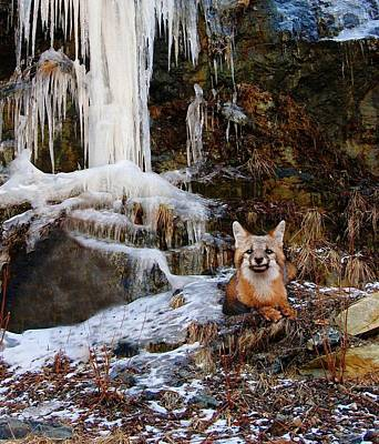 Photograph - Gray Fox And Icescape by Joe Duket