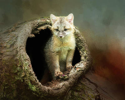 Gray Fox Cub Print by Susan Carter