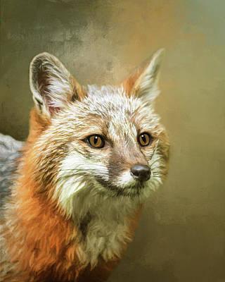 Fox Digital Art - Gray Fox by Susan Carter