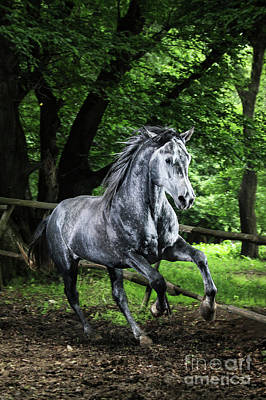 Photograph - Gray Horse Running In The Green Forest by Dimitar Hristov