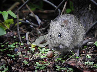 Mouse Photograph - Gray Mouse by Tracy Habenicht
