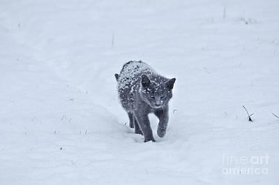 Photograph - Gray On White by Wanda Krack