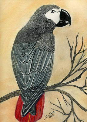 Painting - Gray Parrot by Bertie Edwards