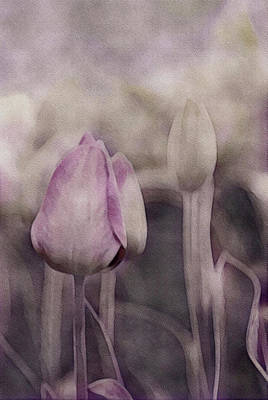 Photograph - Gray Spring Morning by Susan Maxwell Schmidt