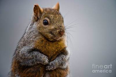 Gray Squirrel Pictures 106 Original by World Wildlife Photography