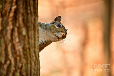 Gray Squirrel Pictures 97 Original by World Wildlife Photography