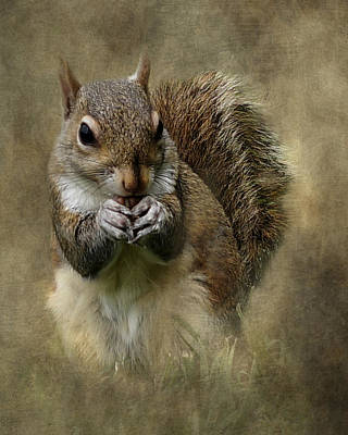 Photograph - Gray Squirrel Portrait by TnBackroadsPhotos