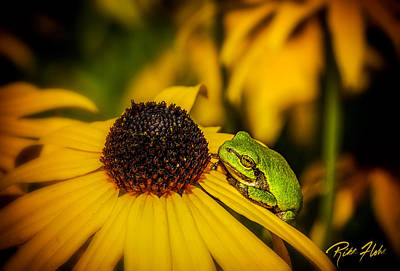 Photograph - Gray Tree Frog In Flowers by Rikk Flohr