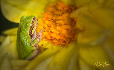 Photograph - Gray Tree Frog On Blossom by Rikk Flohr