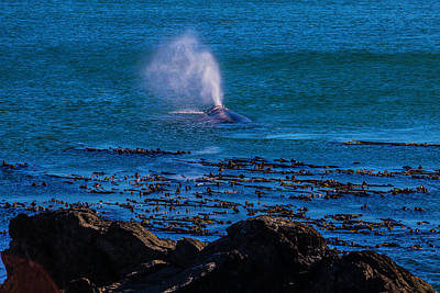 Photograph - Gray Whale Blow Hole by Garry Gay