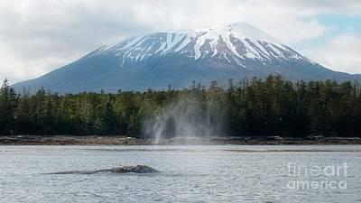 Gray Whale, Mount Edgecumbe Sitka Alaska Art Print