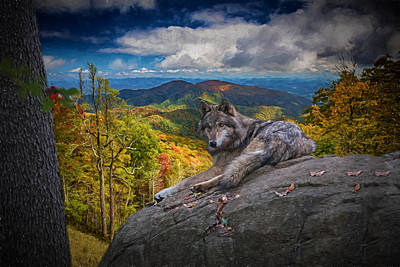 Digital Art - Gray Wolf In Autumn by John Haldane