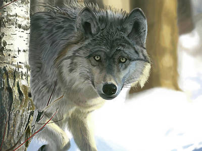 Digital Art - Gray Wolf by Nigel Follett