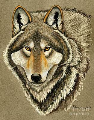 Pastel - Gray Wolf Portrait by Rebecca Wang