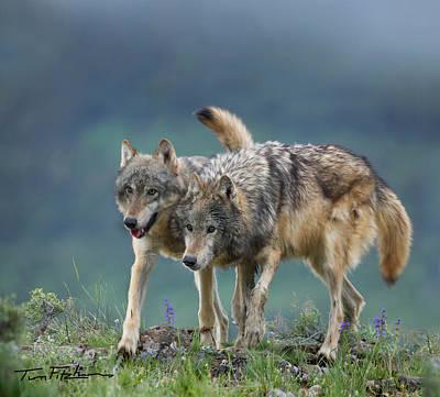Gray Wolves Art Print