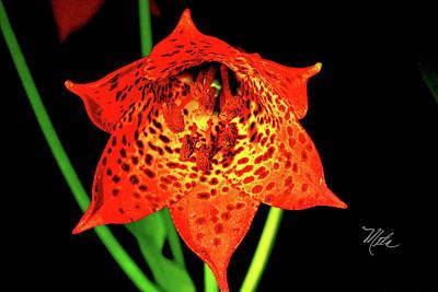 Photograph - Grays Lily Closeup by Meta Gatschenberger