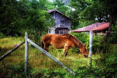 Photograph - Grazin' In The Grass by Debra and Dave Vanderlaan