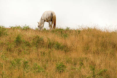 Animals Royalty-Free and Rights-Managed Images - Grazing 0745 by Kristina Rinell