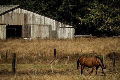 Photograph - Grazing At Home by Laddie Halupa