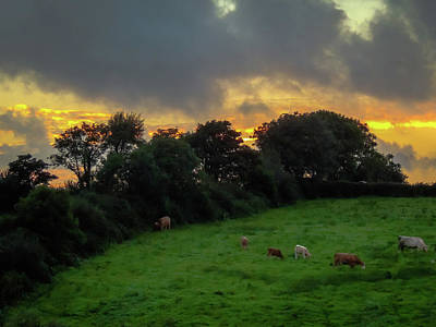 Photograph - Grazing At Sunset by James Truett