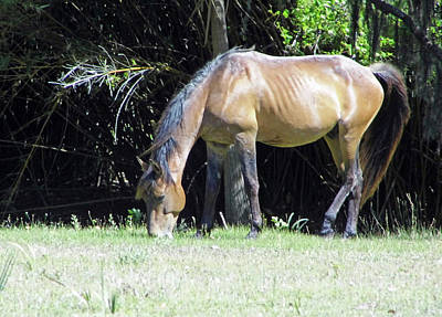 Photograph - Grazing Bay Mare by D Hackett