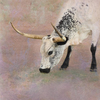 Bos Bos Digital Art - Grazing by Betty LaRue