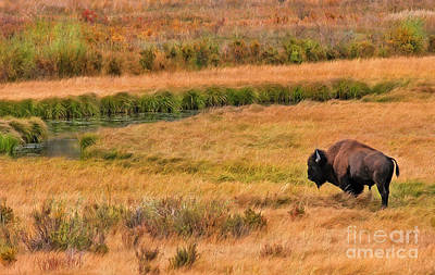 Photograph - Grazing Bison And Stream by Clare VanderVeen