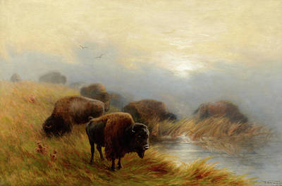 Water Buffalo Wall Art - Painting - Grazing Buffalo by Frederick Arthur Verner
