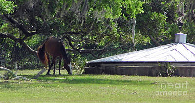 Photograph - Grazing By The Cistern by D Hackett