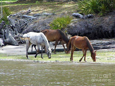 Photograph - Grazing By The Coastline by D Hackett