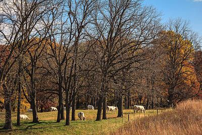 Photograph - Grazing Cows At Casper Bluff by Joni Eskridge