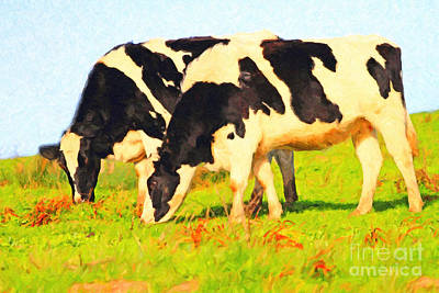 Photograph - Grazing Cows . Photoart by Wingsdomain Art and Photography