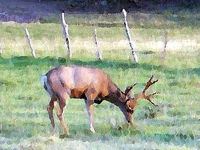The Who - Grazing Deer by Tina Barnash