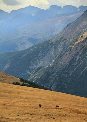 Grazing Elk Photograph - Grazing Elk On Trail Ridge Road by Dan Sproul