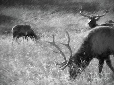 Digital Art - Grazing Elk by Steven Parker